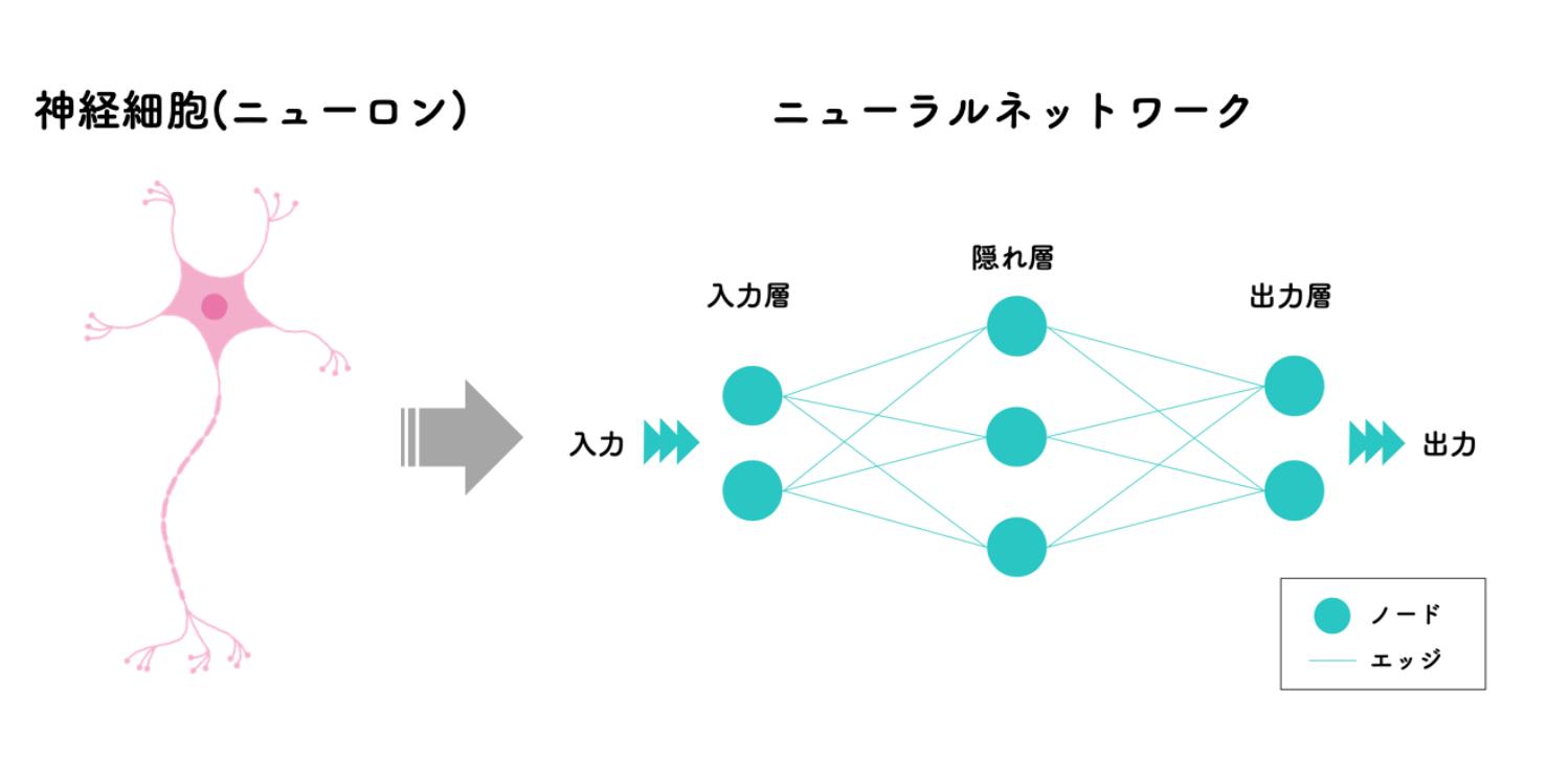 神経細胞とニューラルネットワーク